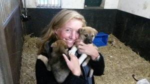 Blog NoortMedia pup