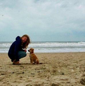 Hond, auto strand