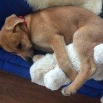 Blog honden opvoeden