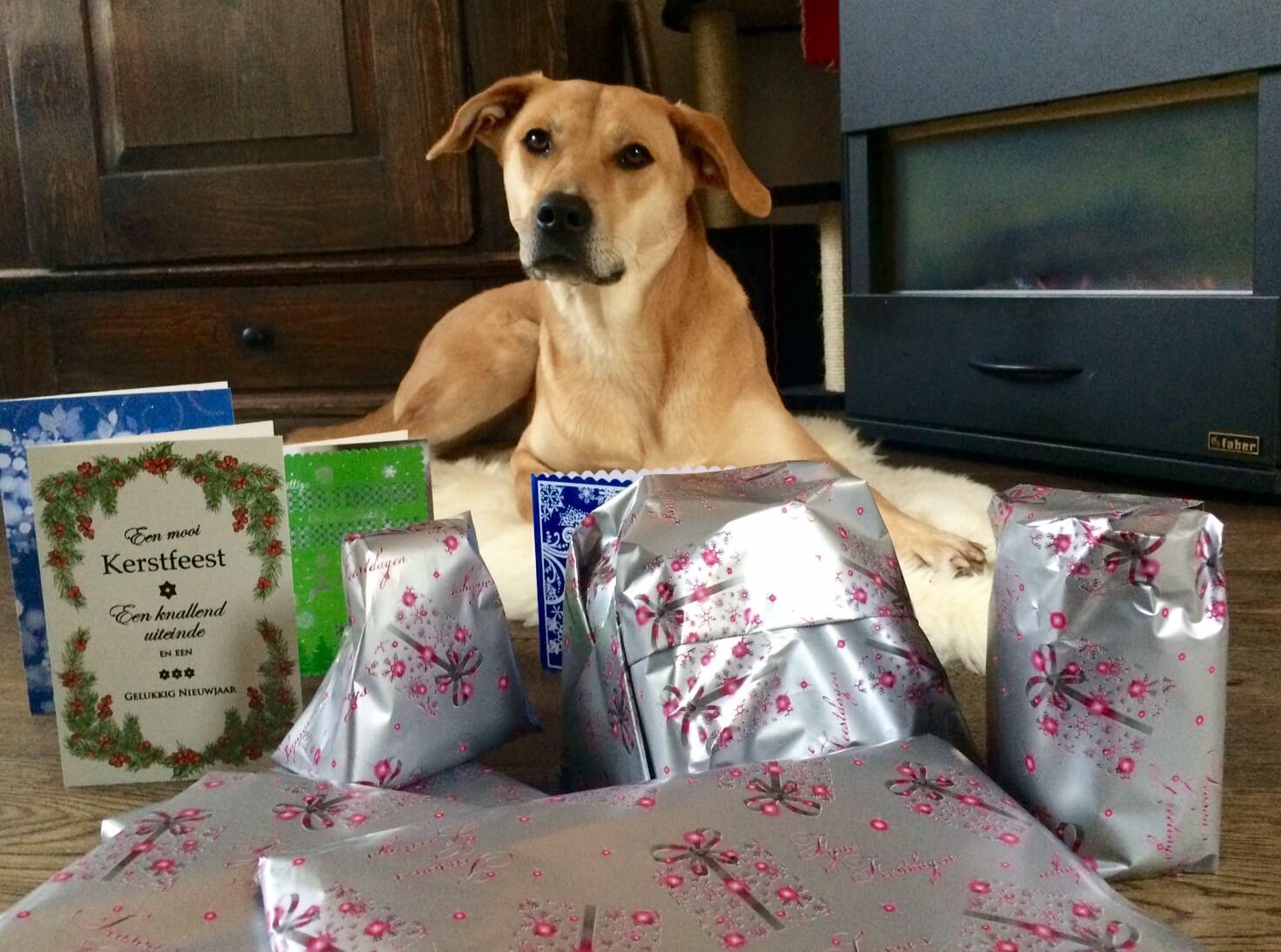 Vergeet de hond niet met Kerst