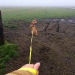Vuurwerk hond