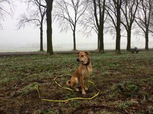 biothaan hond
