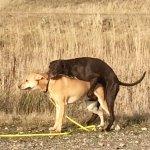 loops hond