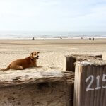 Hond langer alleen