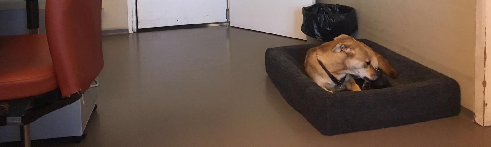 Kantoorhond
