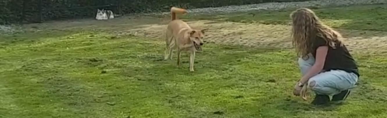 ongewenst-hondengedrag